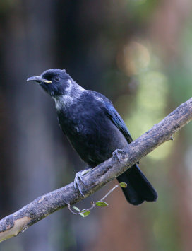 Young Tui